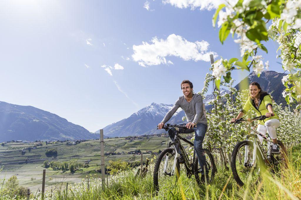 Fahrradfahrer im Frühling (c) allesfoto.com (Der Weinmesser)