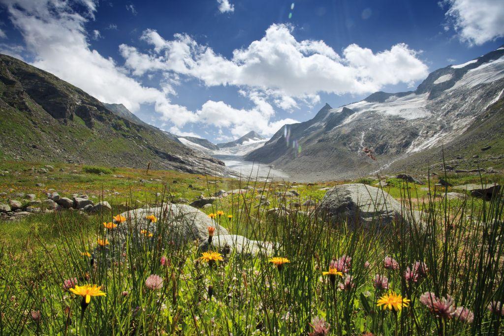 Hochgebirge mit Blumenwiese (Wildkogel Arena)