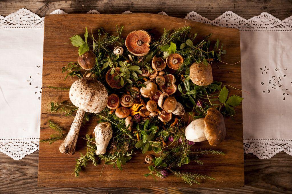 Pilze aus dem Tann Wald (Hotel Tann)