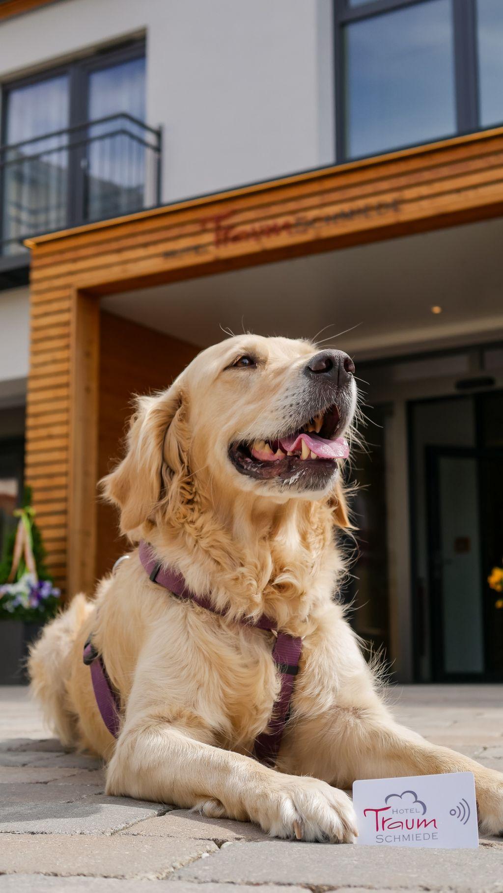 Urlaub mit Hund in der Traumschmiede (c) Veronika Fleischmann (Hotel Traumschmiede und Gasthof zur alten Schmiede)