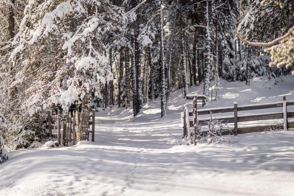 Verschneiter Waldwanderweg im Winter (Hotel Tann)