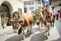 Almabtrieb an den Bauernherbst Festivitäten (c) Florian Bachmeier (TVB Raurisertal)