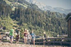 Alpaka Wanderung (alpina zillertal)