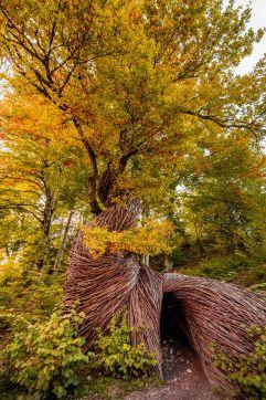 Baumhöhle-Through the soul im Herbst (c) Alberto Libardoni (TVB Valsugana Lagorai)