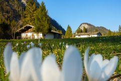 Ruhpoldinger Berglandschaft im 3-Seen-Gebiet im Frühling (C) Ruhpolding Tourismus GmbH