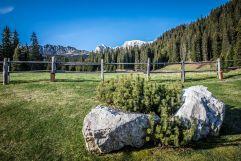 Bergwiese mit Alpenpanorama im Sommer (Tirler-Dolomites Living Hotel)