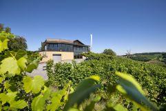 Blick aufs Weingut Wolfgang Maitz im Sommer (winzerhotels)