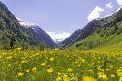 Blühende Frühlingswiese im Seidlwinkltal (c) Florian Bachmeier (Tourismusverband Rauris)