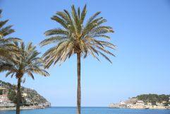 Bucht mit Palmen (Hotel Espléndido)