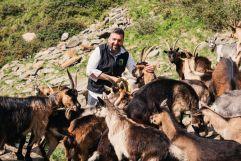 Der Sohn des Hauses Hannes Rainer mit der Ziegenherde (Naturhotel Rainer)