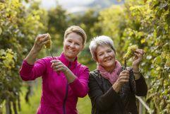 Frauen bei der Weinernte (c) Frieder Blickle (Tourismusverein Algund)