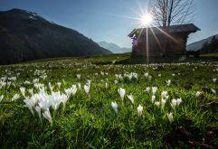 Frühlingsboten im Sonnenschein (Wildkogel-Arena Neukirchen und Bramberg)