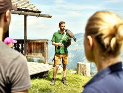 Greifvogelschau auf der Rauriser Hochalm (c) MAYA Inspiranto (Tourismusverband Rauris)