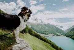 Haushund Lenny (c) Amira Kohlbecker (Wanderhotel Vinschgerhof)