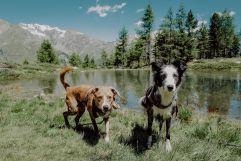 Haushunde vor dem Bergsee (c) Wanderhotel Vischgerhof