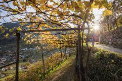 Herbstliche Eindrücke (c) Frieder Blickle (Tourismusverein Algund)
