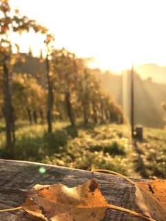 Herbstliche Stimmung in den Weinbergen (Ratscher Landhaus)