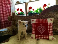 Hund Bella auf Sitzbank (Hotel Enziana)