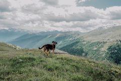 Hund genießt die Aussicht (c) Wanderhotel Vischgerhof