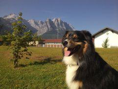 Hund genießt die Natur (MyTirol)