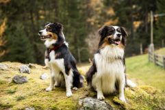 Hunde (c) Martin Karnutsch (Wanderhotel Vinschgerhof)