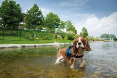 Hunde Schwimmteich (c) Bernhard-Bergmann (Hotel Larimar)
