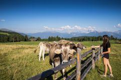 Mädchen mit Kühen in Klausen (Tourismusverein Klausen)