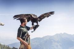 Mann bei Greifvogelschau Falkner mit Adler (c) David Innerhofer (Tourismusverband Rauris)