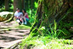 Paar beim Entspannen im Wald (c) Rotwild (Olang)