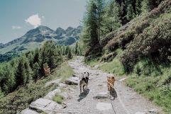 Perfekte Gassi-Wege in den Bergen (Wanderhotel Vinschgerhof)
