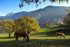 Pferde beim Grasen - (c) Helmuth Rier (Tourismusverein Klausen)