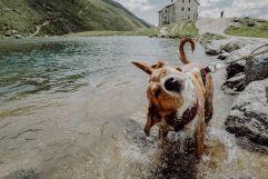 Plantschen im Bergsee mit Haushund Tilly (Wanderhotel Vinschgerhof)