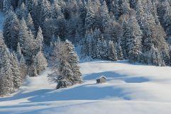 Schneebedeckter Winterwald (Gut Edermann)