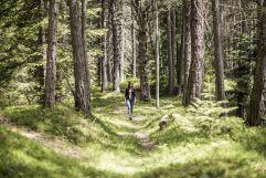 Spazieren im Tann Wald (Hotel Tann)