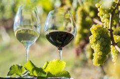 Südtiroler Weingenuss ©Helmuth Rier (Tourismusverein Klausen, Barbian, Feldthurns und Villanders)