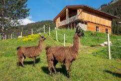 Tierische Nachbarn im Berg Chaletdorf (Benglerwald Berg Chaletdorf)