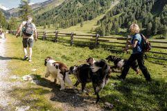 Wandern mit Hund in der Gruppe (Wanderhotel Vinschgerhof)