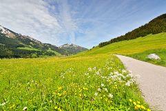 Wanderwege durch die grünen Wiesen (Hotel Bergblick)