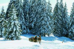 Winterliche Pferdekutschfahrt (Wildkogel Arena)