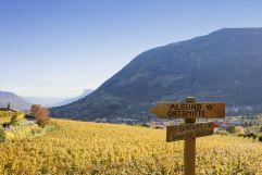 Zeit sich zu entscheiden (c) Frieder Blickle (Tourismusverein Algund)