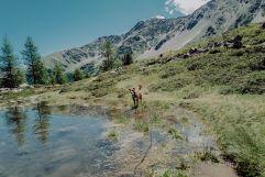 Zwischen Bergen und Seen mit dem Hund unterwegs (Wanderhotel Vinschgerhof)